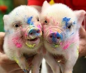 Paint-pigs
