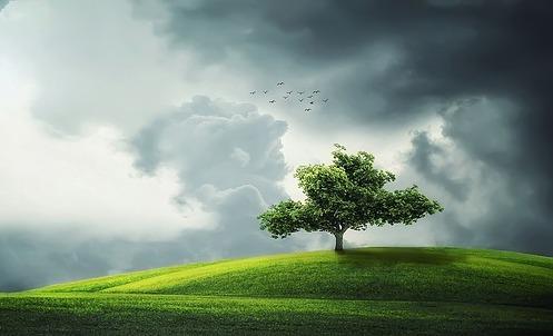 tree-832079_640