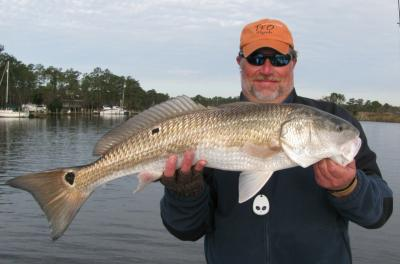 This 32 inch drum came out of the middle of a school of nice specks near Oriental on Nov. 30.  Capt Gary caught the fish on a DOA CAL soft plastic jerk bait and on 6 pound mono.