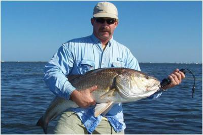 Redfish Release <br><br>Captain Tom Van Horn<br>Mosquito Coast fishing Charters<br>(407) 416-1187 on the water<br>http://www.irl-fishing.com<br><br>