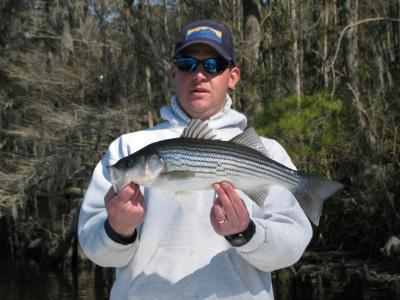 Feb. striper from the Trent River