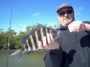 18 inch sheepshead, on shrimp, Estero Bay flats, Bonita Beach, SW FL
