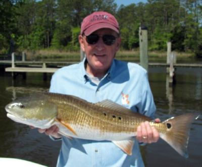 An over the slot redfish caught near Oriental off the Lower Neuse River