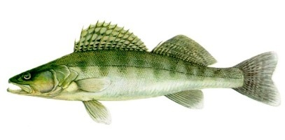 Fish_1518109342_speid436