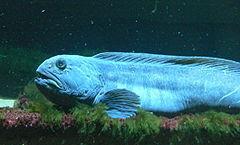 Fish_400667268_speid509