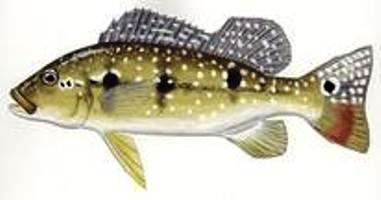 Fish_595862143_speid348