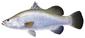 Fish_1025402508_speid312