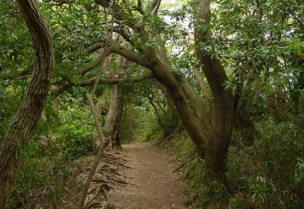 Kamakura_2