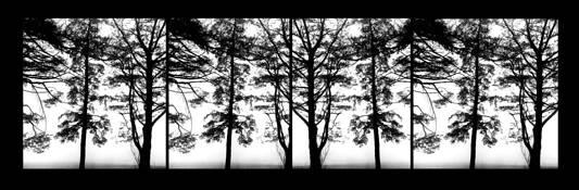 Trees_i