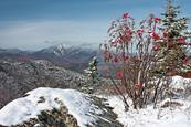 Barry_bush_and_view_of_whiteface_mountain
