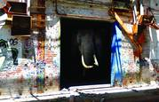 Farsafari_series_-_elephant_house