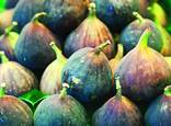 Figs by Erik Offerdal
