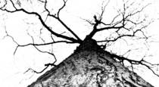 Tree__1