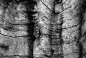 Weathered_wood_15_cm