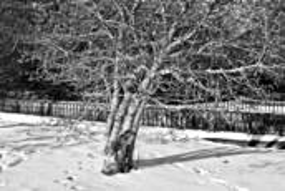 Snow_queen
