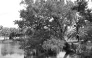 Tree on a bayou