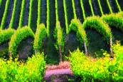 Vineyard Wave by Steve Zmak