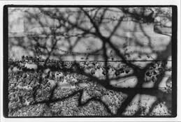 Shadows_2