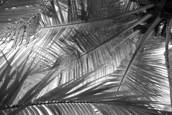 Fronds_2