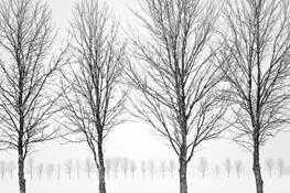 Tree_rows