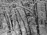 Trees_and_snow