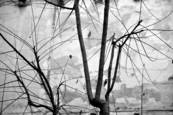 Winter_twigs
