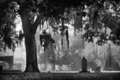 Fog over colonial park cemetery