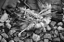 Dead_bird__160