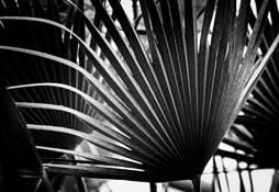 Botanicals_1