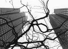 Urban_ecology