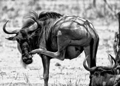 Tanzania_wildlife
