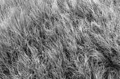 Roadside_grass_1