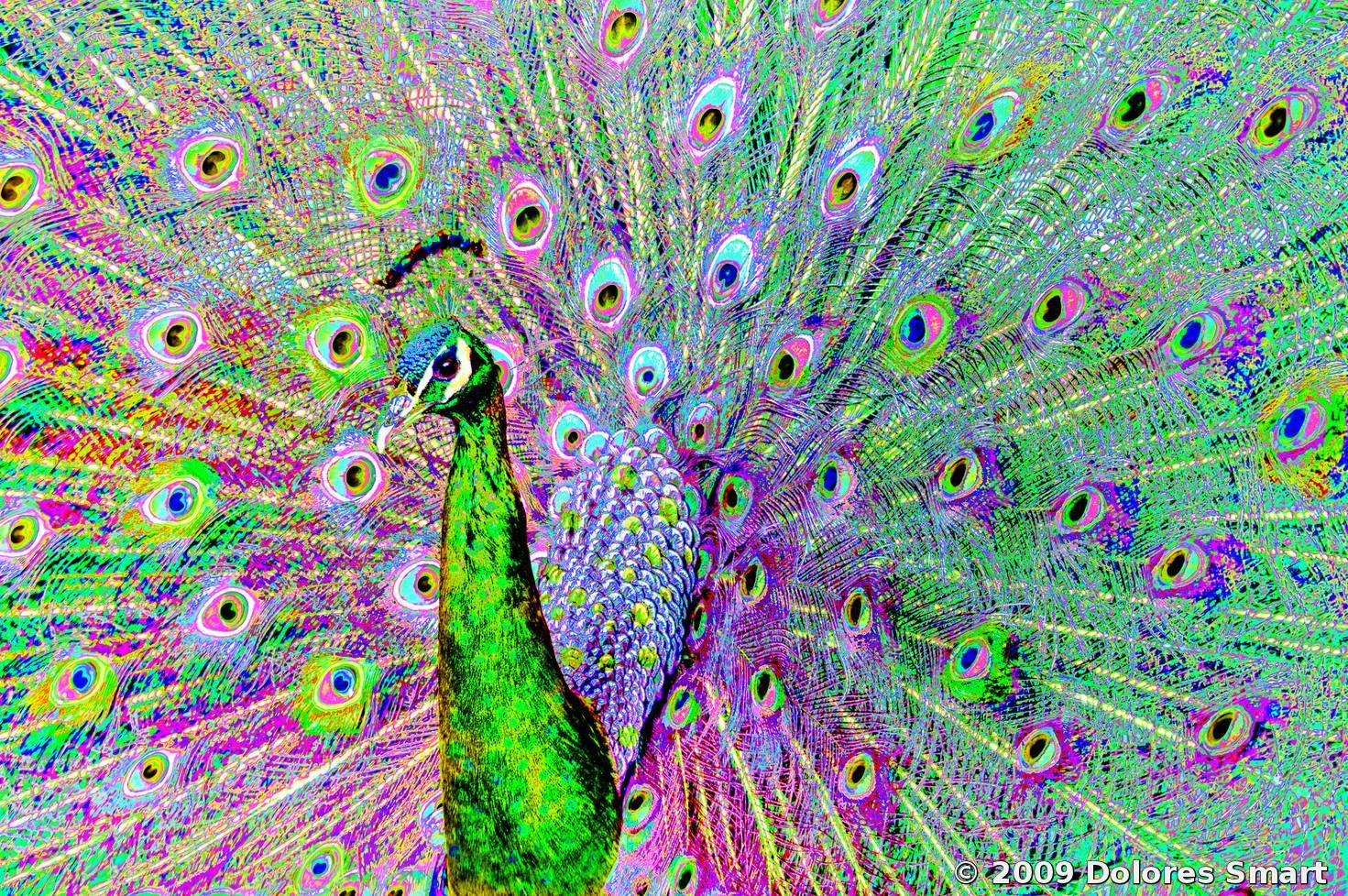 Psychedelic Peacock By Dolores Smart  Black &amp White Magazine