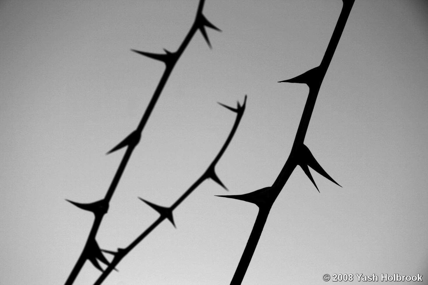winter thorns by yash holbrook black amp white magazine