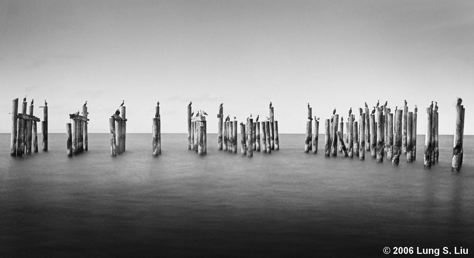 Birds on Pier Pilings by Lung S. Liu :: Black & White Magazine Water