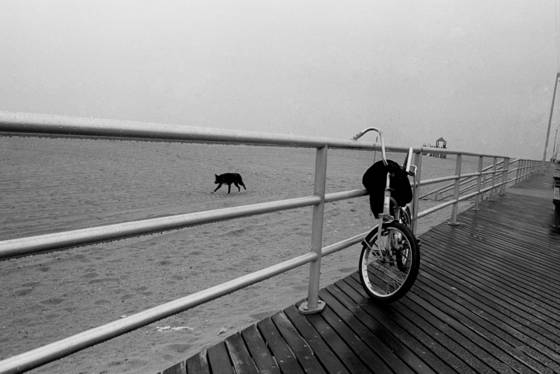 Fog_dog_bike
