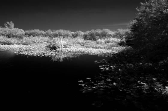 Wetlands_1