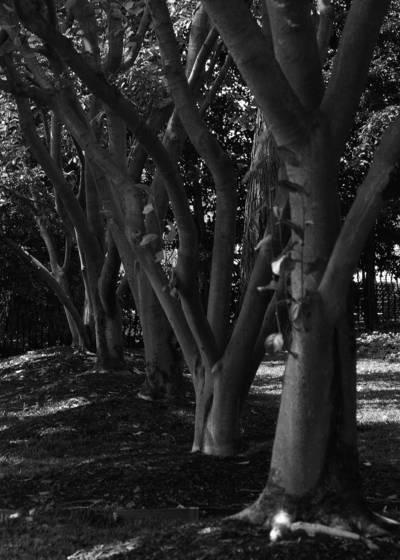 Heart_trees