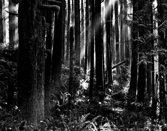 Forest_beams