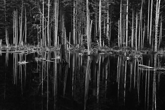 Forest_mirror