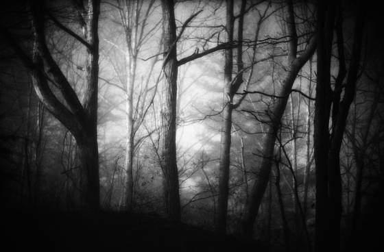 Marshall_woods