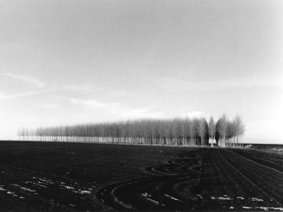 Tree_farm