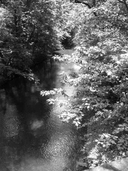 Bronx_river