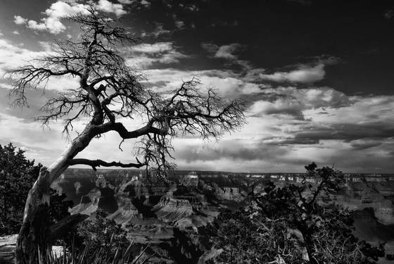 Creepy_grand_canyon