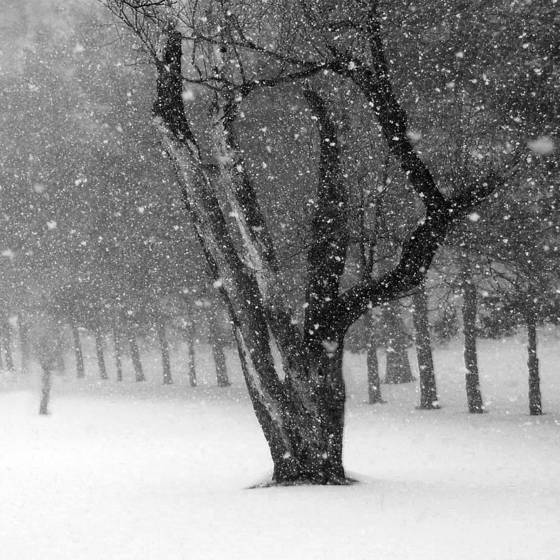 Woods_on_a_snowy_eve