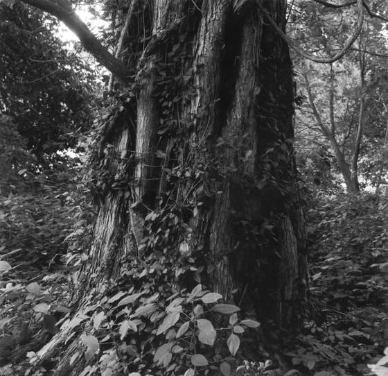Trees__7