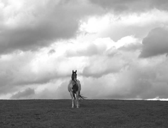 Lone_horse