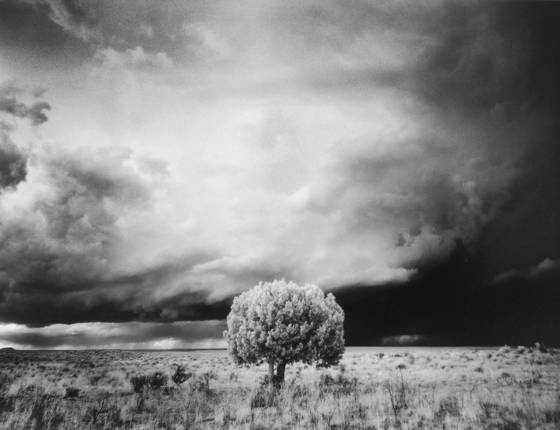 Tree and storm