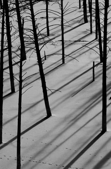 Winter_shadows