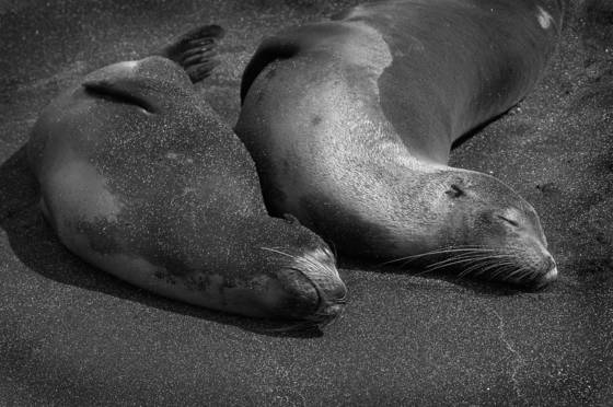 Sleeping_seals
